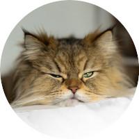https://ijuststarted.com/wp/wp-content/uploads/2019/12/cat_01.jpg